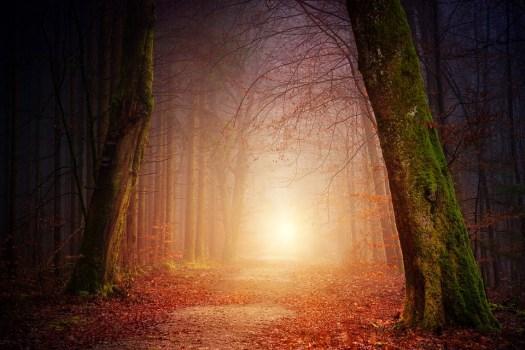 Natura, Foresta, Alberi, Luce, Sole, Nebbia, Nebbioso