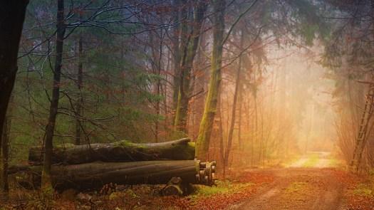 Autunno, Nebbia, Forest, Tronchi, Via