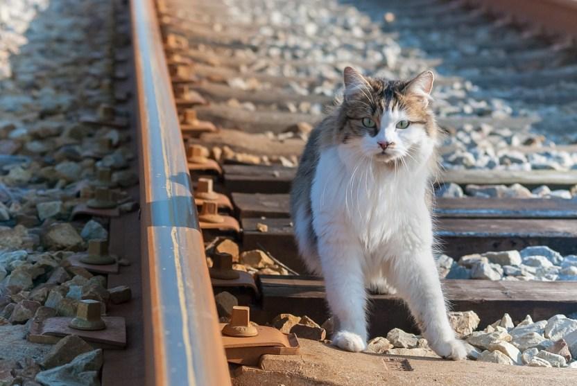 Skimbleshanks - The railway cat.