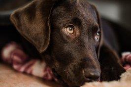 Dog, Cute, Mammal, Portrait, Pet, Puppy