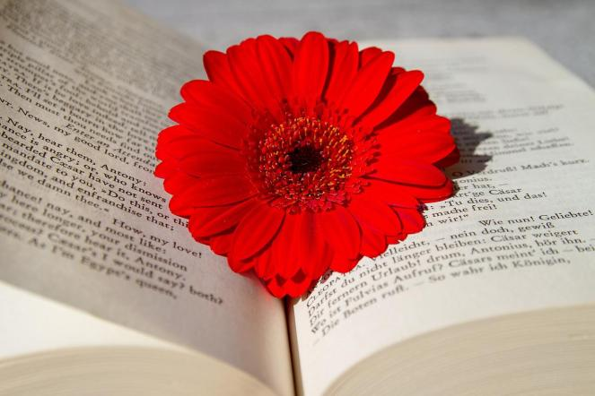 Livro, Livro Aberto, Leitura, Flor, Gerbera, Vermelho