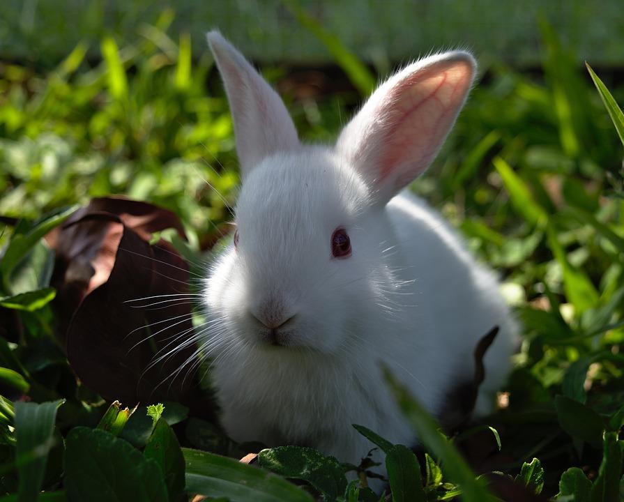 Kids Animal Wallpaper Rabbit Bunny Hare 183 Free Photo On Pixabay