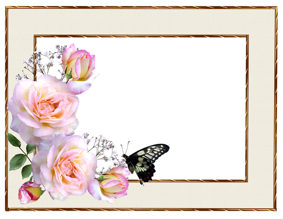 Butterfly And Border Rose