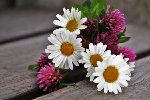 Primavera, Trifoglio, Fiore, Natura, Pianta, Estate