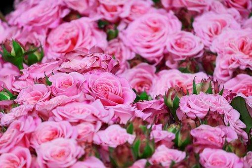 20 000 rose images