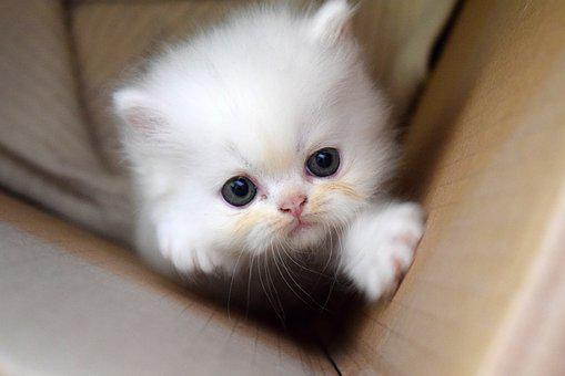 Kitten Pussy Cat Kittens Charming