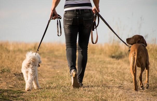 Dog, Walk, Animal, Human, Trust, Nature, Away