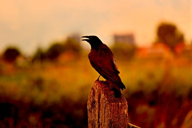 Bird watching brings one peace of mind and makes you  feel better.
