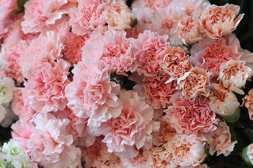Fleurs, Rose, Romance, Floral