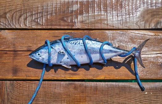 Pesce, Fresco, Cattura, Marine, Ristorante, Pescatore