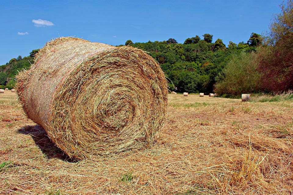 nottingham clifton farm field