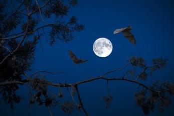 満月, 夜, コウモリ, 暗闇の中, ハロウィーン