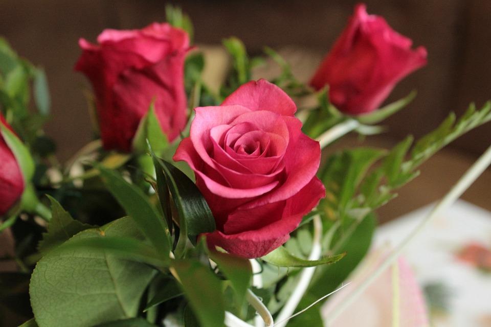 roses flower flowers free