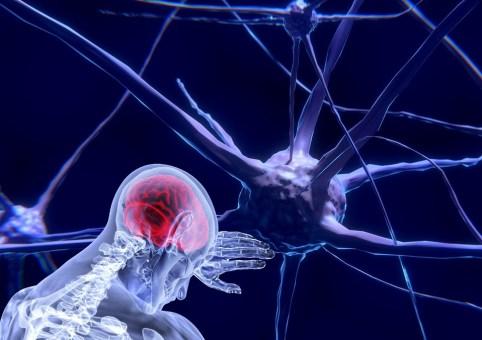 Neuroni, Cervello, Neuroscienze, Rete