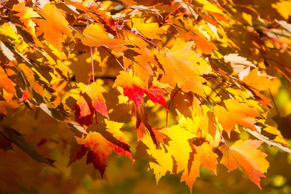 fall autumn trees free