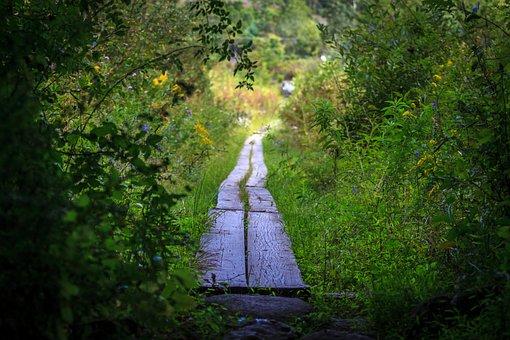 歩道, 森林, 自然, 葉, パス, 秘密のパス, 夏, 緑のパス