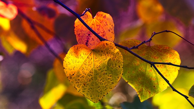 Wallpaper Nature Fall Autumn Leaves Mood Fall Color Free Photo On Pixabay