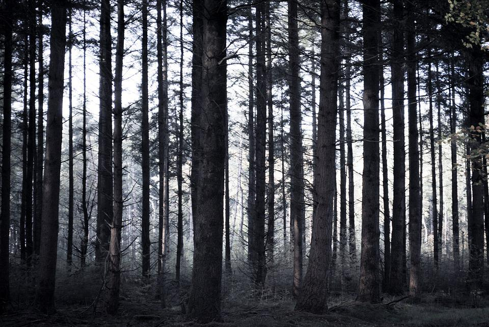 spooky forest trees free