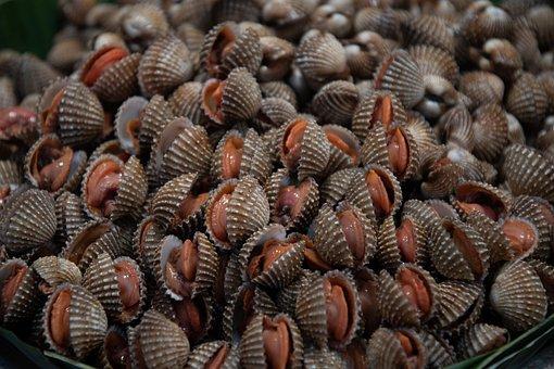 หอยแครง, อาหารทะเล, หอย, เปลือก, ทะเล