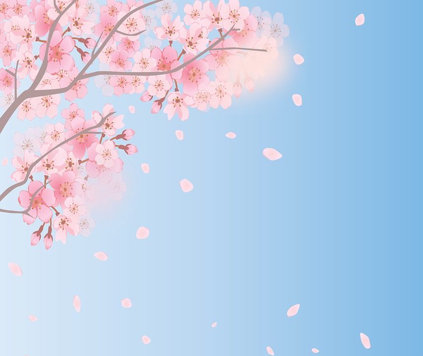 spring background cherry blossoms