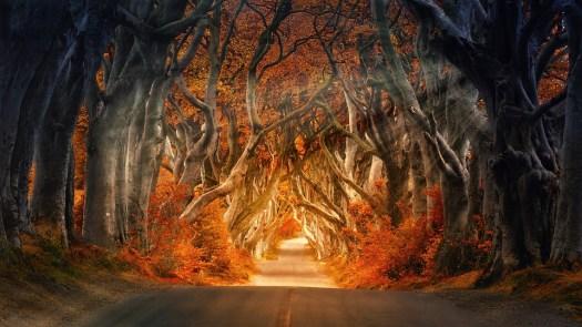 Dark Hedges, Armoy, Irlanda, Strada, Viale, Forest
