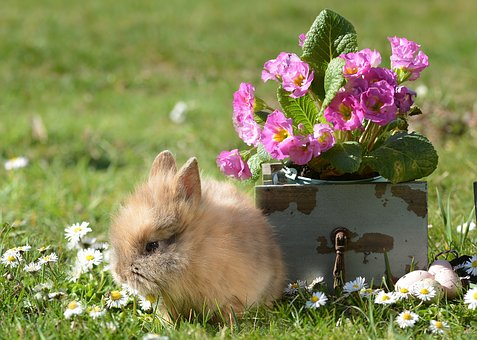 Rabbit, Easter, Hare, Easter Bunny, Cute