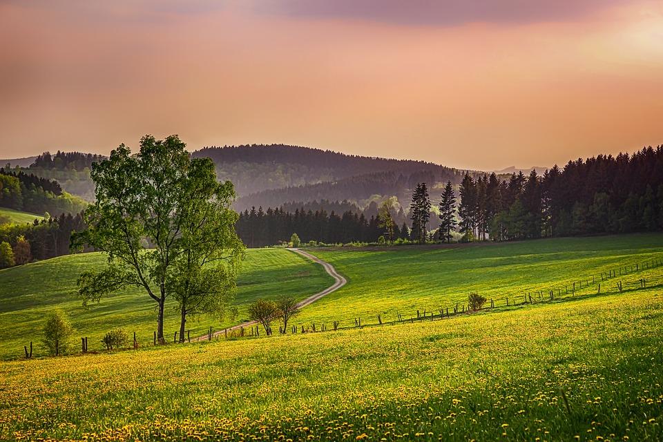 ザウアーラント, ドイツ, 風景, 自然, 報告, 牧草地, フォレスト