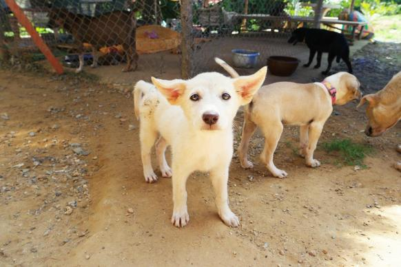 Image result for pet rescue