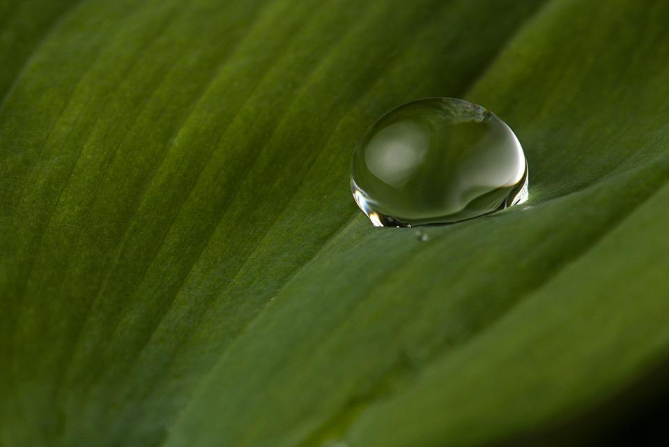 goutte d eau feuilles macro la photo