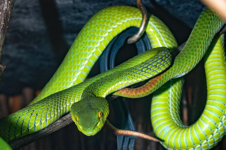 가장 오래된 기억 뱀
