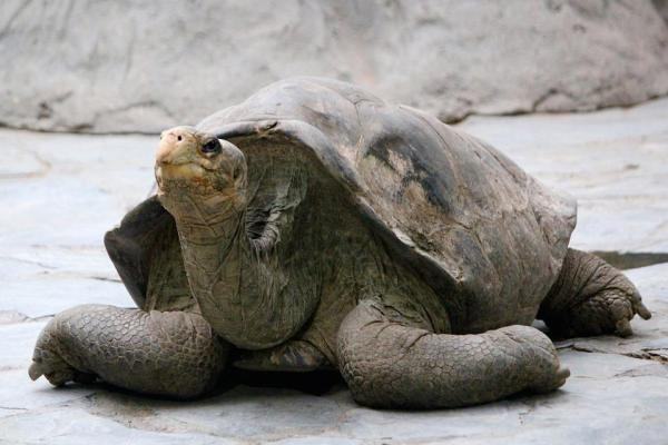 Turtles in Galapagos Islands? Yes! Source: Pixabay