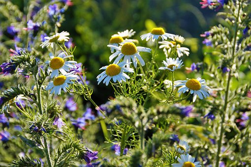 get rid of weeds in the garden