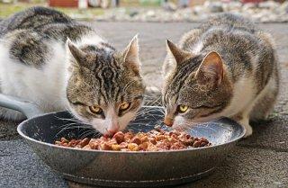 Gatos, Comer, Los Alimentos