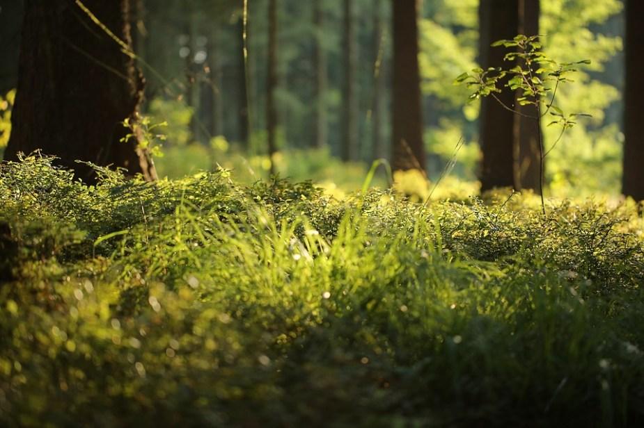 Foresta, felce, foresta, natura, verde, pianta, muschio
