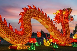 Dragon, Chinese, Lantern, Chinese Lantern, China, Asian