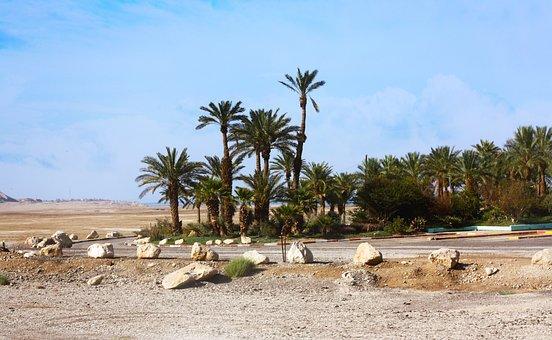 Désert, Palmiers, Oasis, Nature, Paysage