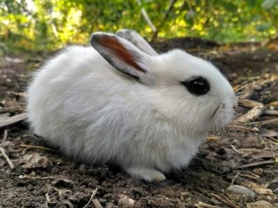 cute rabbit 4953146 1280
