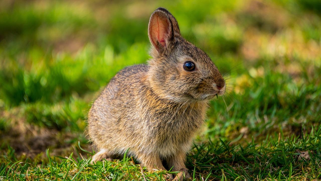 Bunny Rabbit Spring Baby Free Photo On Pixabay
