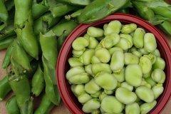 Broad Beans, Beans, Food, Vegetables