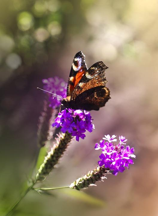 Gambar Bunga Dan Kupu-kupu : gambar, bunga, kupu-kupu, Tanaman, Bunga, Gratis, Pixabay
