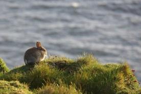 Rabbit, Grass, Cliff, Hare, Bunny, Animal World