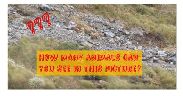 How Many Animals Can You See In This Picture Playbuzz