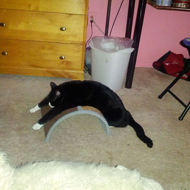 I suppose you have to be grateful that this cat is actually using this scratching post, even if it might not be in the way intended.