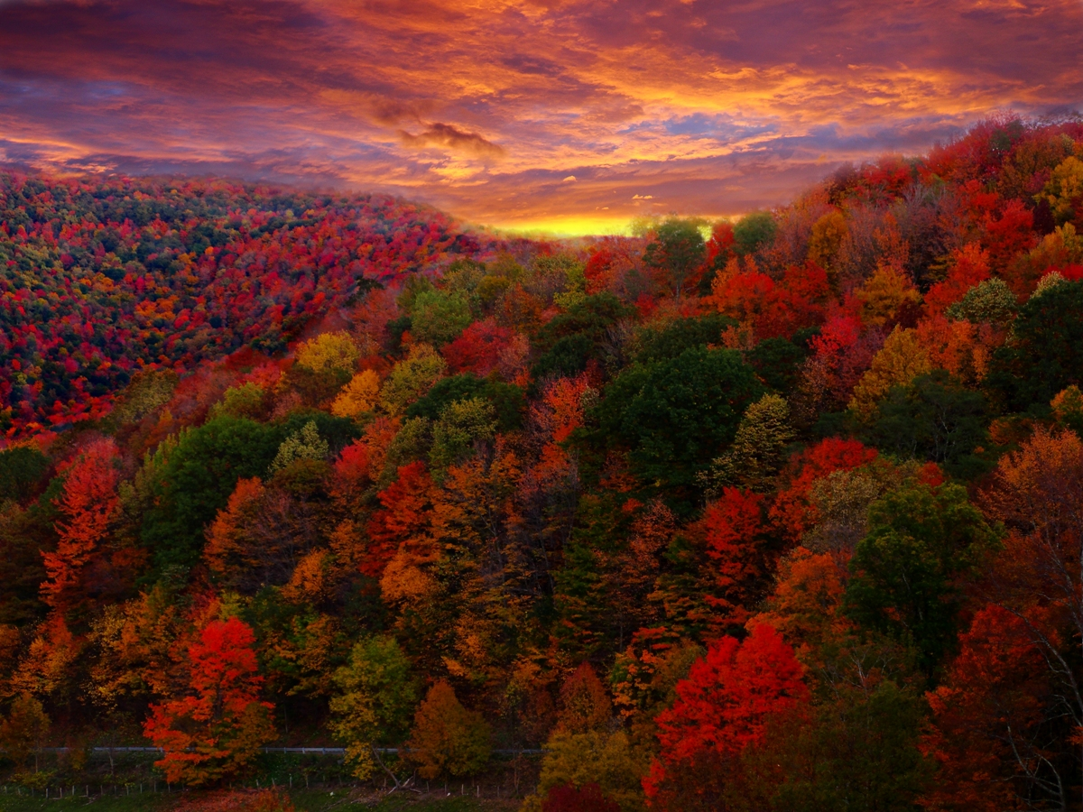 Image result for fall color