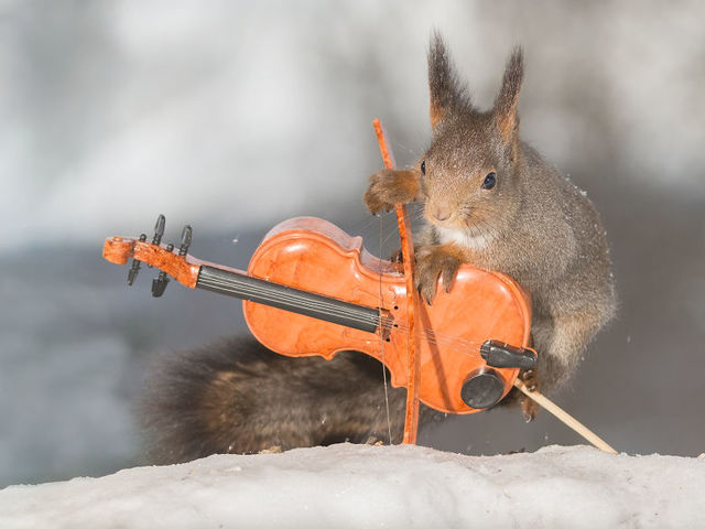 These pictures are actually real pictures that haven't been tampered with very much. Photographer Gert Weggen noticed that squirrels congregated outside his kitchen window, so he decided to build an outside studio for them. The results are adorable.