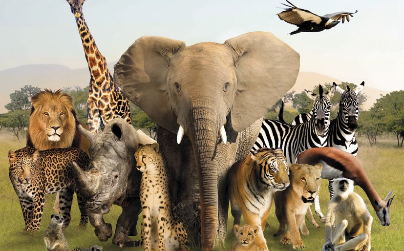 Image result for group of animals