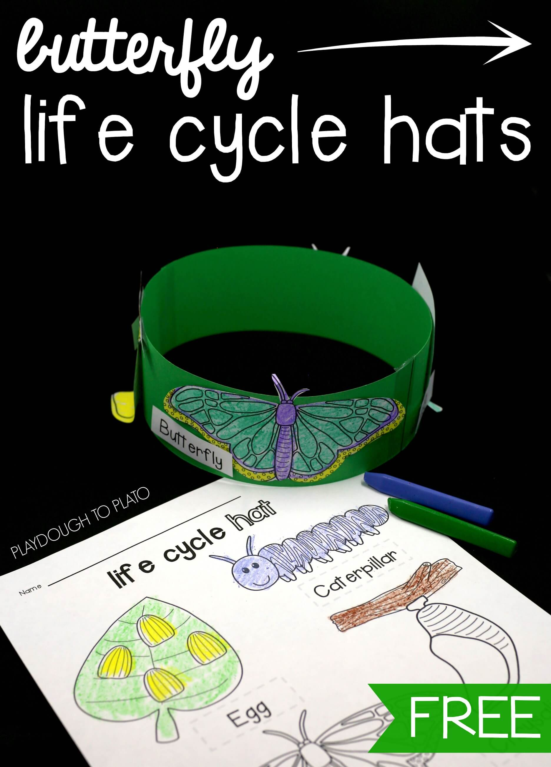 Butterfly Life Cycle Hats