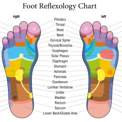 Foot Nerve Endings Diagram Crutchfield And Wiring Guide Reflexology Chart Jpg