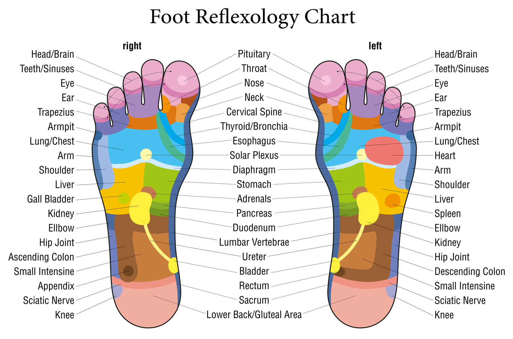 hight resolution of reflexology