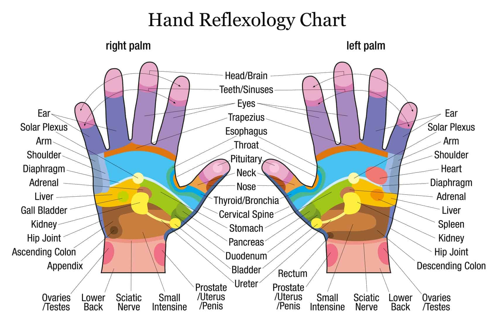 foot massage therapy diagram bacteria structure hand when you touch these points on your hands